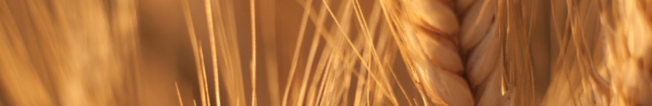 Aminosoft Wheat